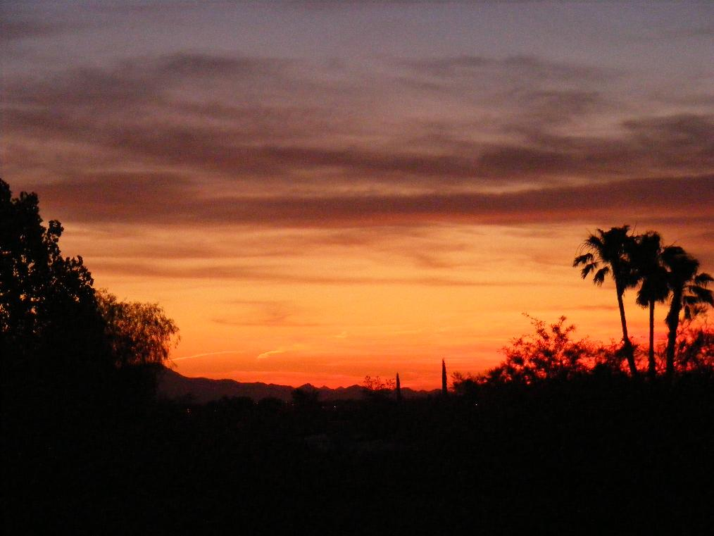 Arizona Sunset Palm