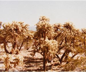 View More Arizona Sonoran Desert Photos